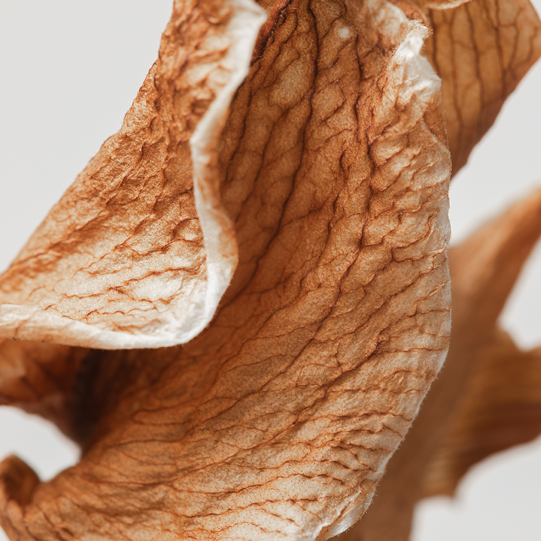 Dried leaf - Kate Male Brand Designer