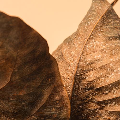 Autumn Branding